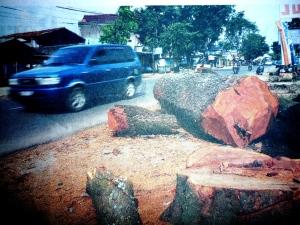 penebangan pohon demi pembangunan fisik